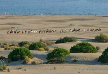 Horse back riding on the beach Espiguette