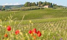 Excursion « vignes et oliviers » autour de Montpellier