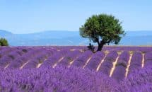 Excursion en Provence